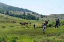 Randonnée sur le plateau du Cuscionu_13